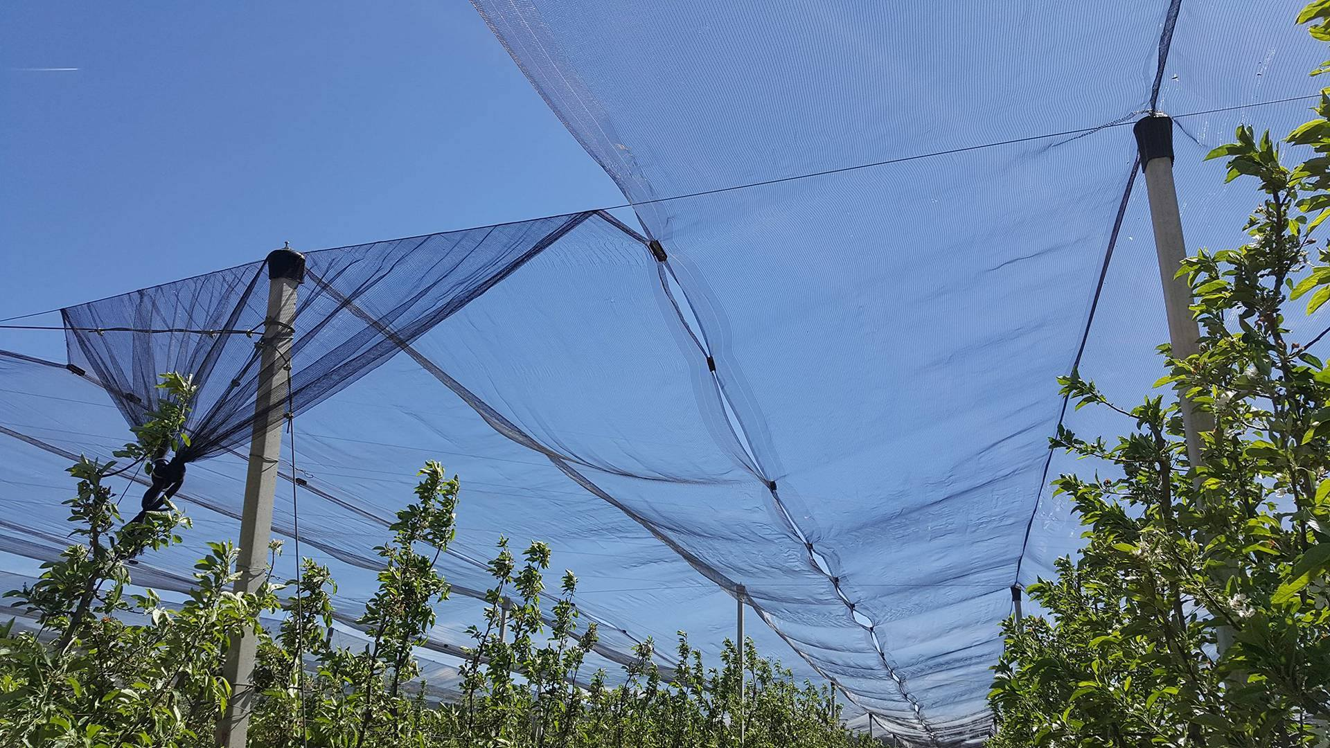 поставяне на мрежа против градушка